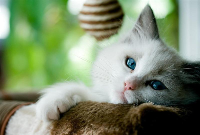 Что испытывает кошка, когда ее обижают?