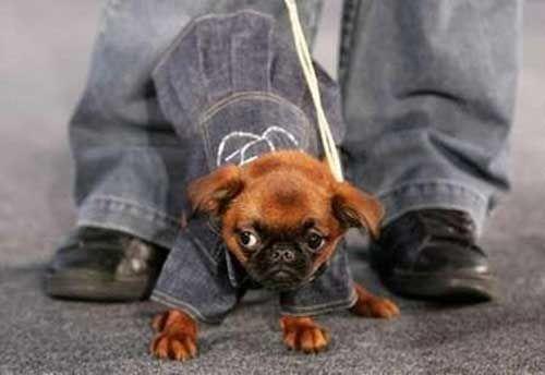 Ищем интернет-магазин недорогой одежды для собак