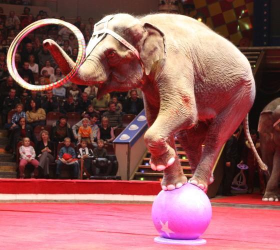 Самые захватывающие цирковые жанры